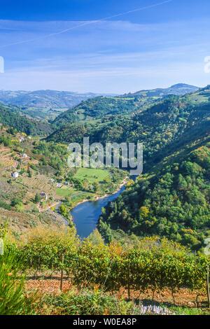 France, Auvergne, Cantal, Châtaigneraie, La Vallée du Lot and the hillsides with vines at Fel - Stock Photo
