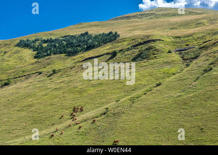 France, Hautes-Pyrénées, grasslands between the Col de Peyressourde and the Val Louron-Azet - Stock Photo