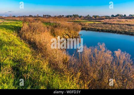 France, New Aquitaine, Arcachon Bay, La Teste de Buch, Bordes salt marsh - Stock Photo