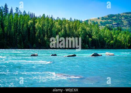 Lake Kanas, Xinjiang lakeside forest - Stock Photo