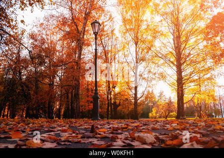 Autumn city landscape. Autumn trees in sunny fall park lit by sunshine and fallen maple leaves on the foreground. Autumn city park scene - Stock Photo