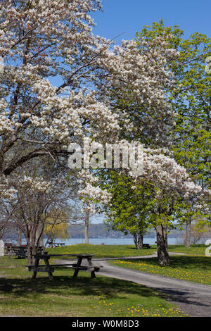 Long Point State Park in Bloom - Stock Photo