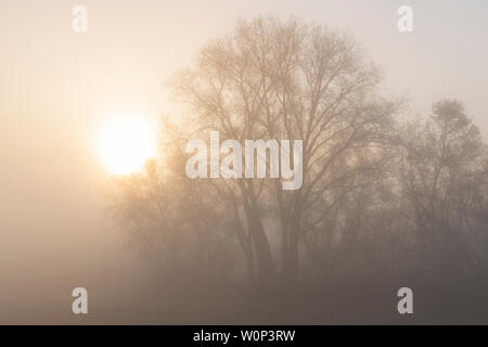 Sunrise, forest shrouded in fog, early May, Eastern USA, by Dominique Braud/Dembinsky Photo Assoc - Stock Photo
