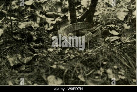 Archive image from page 46 of Der deutschen Heimat Kriechtiere und - Stock Photo