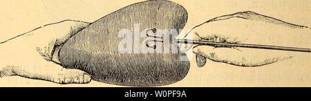 Archive image from page 55 of Der Präparator und Konservator . Der Präparator und Konservator : eine praktische Anleitung zum Erlernen des Ausstopfens, Konservierens und Skelettierens von Vögeln und Säugetieren für Naturfreunde derprparatorundk00voeg Year: 1895  SIÖÖ. 20 (o$ne SBevfd&nürung). ot)ne bafc man einen S9er Su betuegen brauet, amit ber SDrafit audj in ber djftbelfyöljle befeftigt toerben fann, ift ber obere Seil fd)leffenartig um zubiegen, tüte au 316b. 22 crfid)tltdj tnirb.    it 21. Bet eingefteefte £al3brä§te $eigenb, aum $)re§en fertig. SöoHte man ben fünftftdjen §al§ gerabe fo - Stock Photo