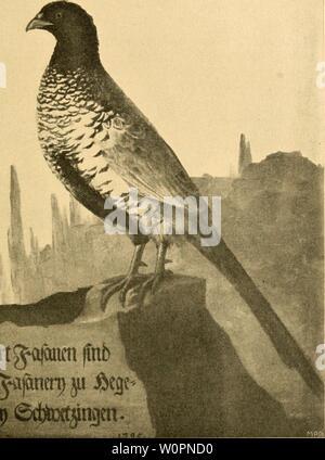 Archive image from page 98 of Der Fasan in Bayern . Der Fasan in Bayern : eine Historische und Zoologische darstellung derfasaninbayern00pocc Year: 1906 - Stock Photo