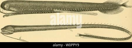 Archive image from page 115 of The depths of the ocean - Stock Photo