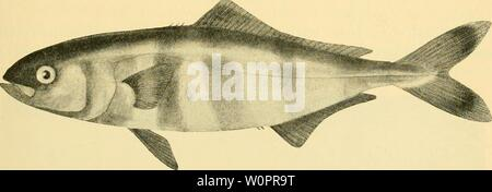 Archive image from page 120 of The depths of the ocean - Stock Photo