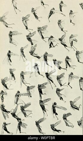 Archive image from page 133 of Der Ornithologische Beobachter (1902). Der Ornithologische Beobachter derornithologisc09alas Year: 1902 Stock Photo