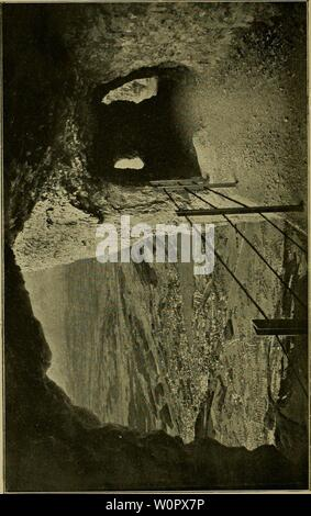 Archive image from page 157 of Der Ornithologische Beobachter (1902). Der Ornithologische Beobachter derornithol1919211922alas Year: 1902  ns CD - Stock Photo
