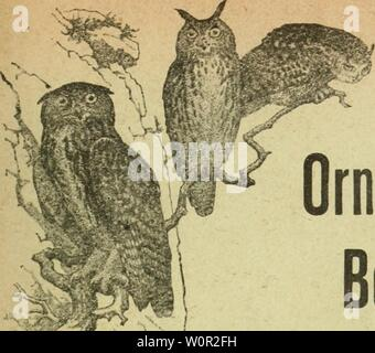 Archive image from page 212 of Der Ornithologische Beobachter (1902). Der Ornithologische Beobachter derornithologisc12alas Year: 1902 - Stock Photo