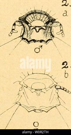 Archive image from page 216 of Der Fasan in Bayern . Der Fasan in Bayern : eine Historische und Zoologische darstellung derfasaninbayern00pocc Year: 1906 - Stock Photo