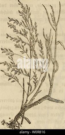 Archive image from page 307 of Der wiesenbau in seinem ganzen. Der wiesenbau in seinem ganzen umfange derwiesenbauinse00hafe Year: 1847  - 288 - ber @igenfa)aft $ugefo;rieben wer t>en, bie e$ bejtfct, tag e$ immer unb fo lange, bi$ er friert, frtfa)e 23lütf)enjkngel tretet» or$üg lta)e Ülarbe, allein e$ er£ol?t ben 2öert£ ber mitiljmgefäetenrä fer bura) feine -iftajjr jjaftigfeit, fo Wie bie @igenfa;aft, frü unb fpät $u treiben, nnb eS fann beßpalb au$ biefeä ra$ ben be Pen räfern bewäf ferter Siefen beige feilt werben» 2L ®erippte$ Rispengras, Poa nervata. dtityt aufrecht, oft einen palben - Stock Photo