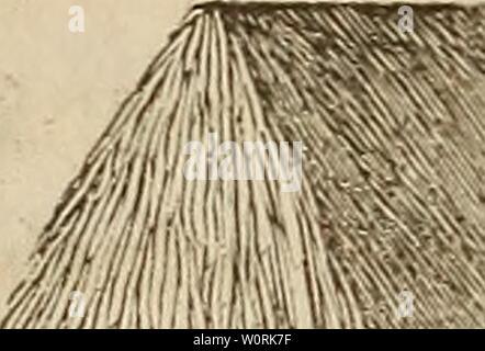 Archive image from page 451 of Der wiesenbau in seinem ganzen. Der wiesenbau in seinem ganzen umfange derwiesenbauinse00hafe Year: 1847  — 424 —    erhält, unb bann mit bem Redjen fauber abgezogen, fo baf? bie äußeren Halmen unb Blätter regelmäßig $u liegen fommen, unb etwatger Regelt an benfelben ablaufen fann. o läßt man nun bte ipocfe bi$ §ur »ölltgen 2lu$trocfnung fteben; (entere wirb, /c naa)bem ba$ ra$ auf trocfenem ober mafttgem 23oben geßanben, in 6—8 £agen erfolgen. £rttt anbaltenb regnertfa)e Witterung ein, fo bringt man ba$ rag, aua) wenn foteee noa) nta)t gehörig abgetroefnet, in f - Stock Photo