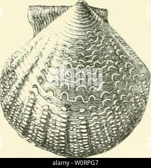 Archive image from page 520 of The depths of the sea; - Stock Photo