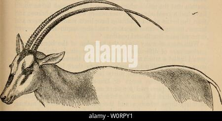 Archive image from page 530 of The descent of man, and - Stock Photo