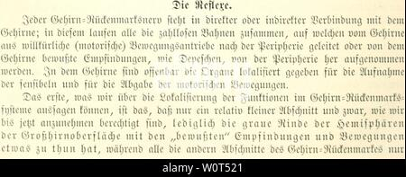 Archive image from page 599 of Der Mensch (1886-) - Stock Photo
