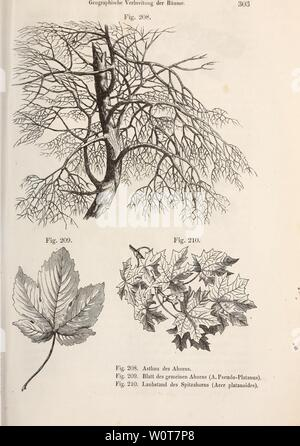Archive image from page 620 of Der baum (1860) Stock Photo