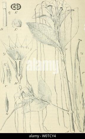 Archive image from page 651 of Der Tropenpflanzer; zeitschrift fr tropische - Stock Photo