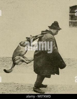 Archive image from page 757 of Der deutsche Schäferhund in Wort - Stock Photo