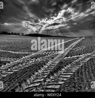 Tractor tracks, a field near Oberweser, Weser Uplands, Weserbergland, Hesse, Germany - Stock Photo