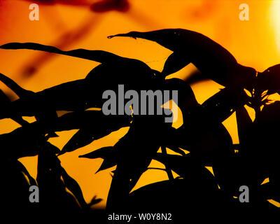 Dark side of trees in sunrise. - Stock Photo