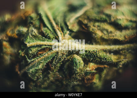 cannabis bud lies on the table close-up. legalized soft drug. dried hemp leaf in macro. - Stock Photo