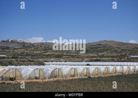 Array of plastic tunnel greenhouses with field of young vegetables in front against a blue sky. - Stock Photo