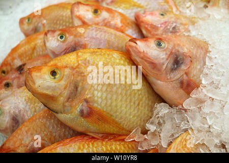 Heap of Fresh Raw Ruby Fish of Thailand on Ice at the Market, Texture background - Stock Photo