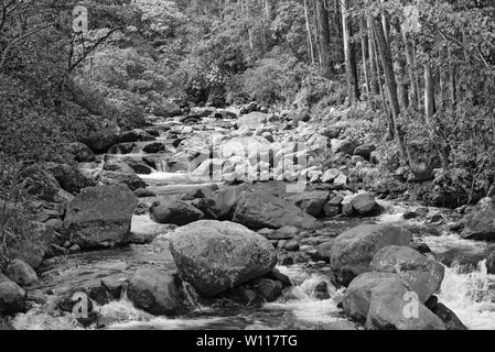Small stream in Volcan Baru National Park Panama in black and white - Stock Photo