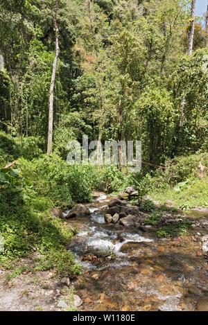 Small stream in Volcan Baru National Park Panama - Stock Photo