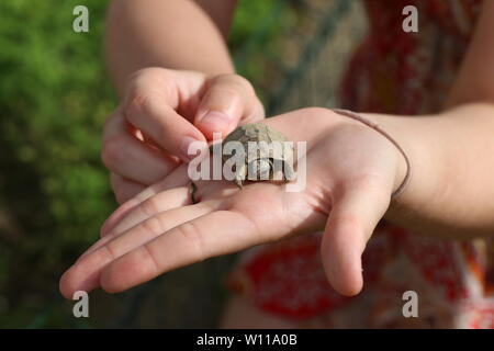 A small turtle in the palm of your hand. - Stock Photo