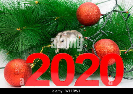 The symbol of the New Year, the rat runs under the tree next to the numbers 2020. - Stock Photo