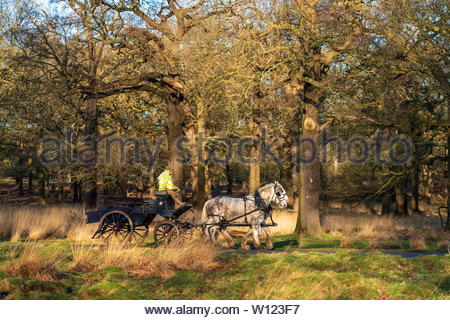 A man riding a horse and cart through Richmond Park early one late winter morning. - Stock Photo