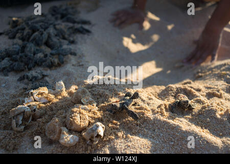 Turtles nesting site. Playa Mayto, Jalisco. Mexico - Stock Photo