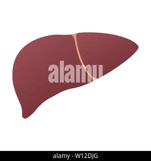 Human liver anatomy. Human internal organs symbol. Vector illustration isolated on white background - Stock Photo
