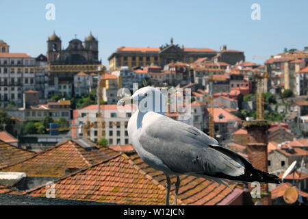 Seagull and view of roofs of old town, church, buildings  Porto Oporto Portugal Europe EU  KATHY DEWITT - Stock Photo