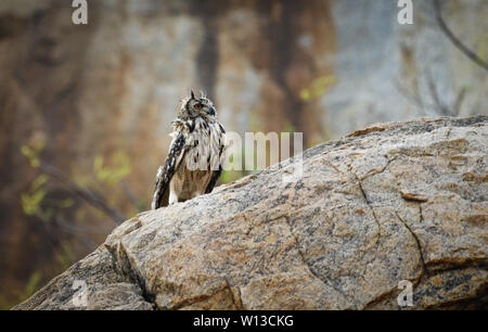 Eagle owl perching on the rock - Stock Photo