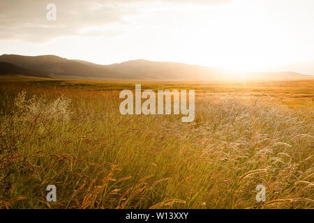 At sunset, the reeds in the backlight by Lake Selimu - Stock Photo