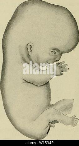 Archive image from page 107 of The development of the human. - Stock Photo