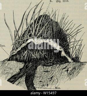 Archive image from page 111 of Die ameise Schilderung ihrer lebensweise. - Stock Photo