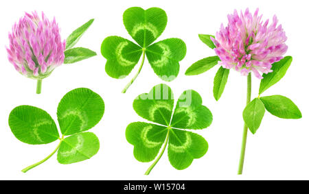 Isolated clovers. Collection of clover leaves and flowers isolated on white background with clipping path - Stock Photo