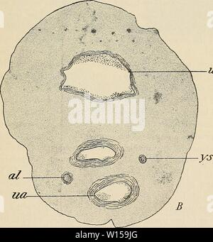 Archive image from page 128 of The development of the human. - Stock Photo