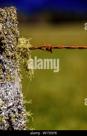 New Zealand, South Island. Old fence post and rusty barbed wire. Photo: © Simon Grosset. Archive: Image digitised from an original transparency. Taken - Stock Photo