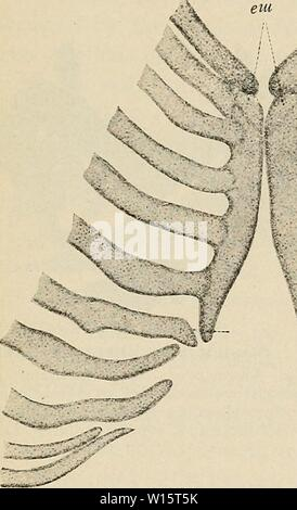 Archive image from page 178 of The development of the human. - Stock Photo