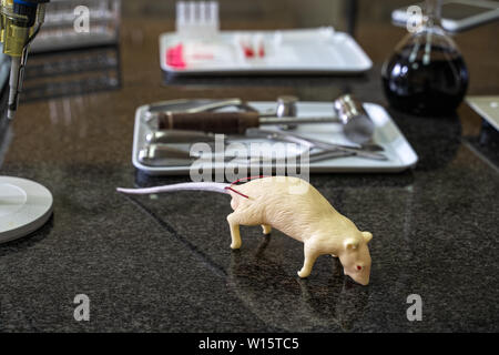 Artificial lab rat and surgical tools set on laboratory worktop, lab equipment and glassware in background - Stock Photo