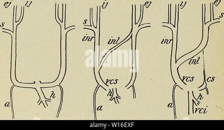 Archive image from page 269 of The development of the human. - Stock Photo