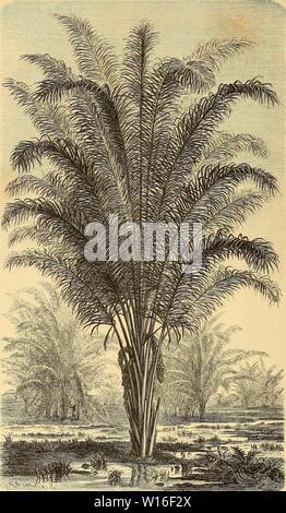 Archive image from page 271 of Die Loango-Expedition ausgesandt von der. Stock Photo