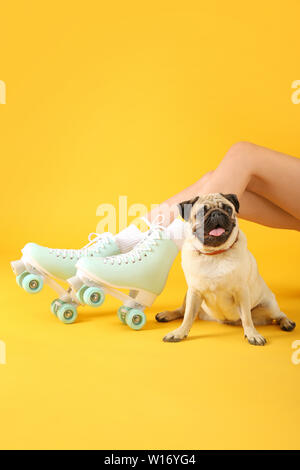 Cute pug dog and woman in roller skates on color background - Stock Photo