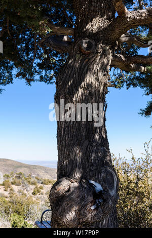 Trees grow on rock formations of sandstone and rhyolite in the Chiricahua National Monument in Southeastern Arizona, USA. - Stock Photo
